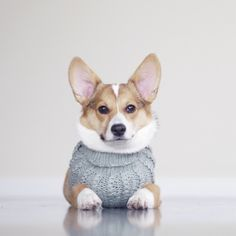 9 Cute Animals Who Dress Better than We Do
