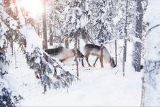 Finland, Around The Worlds, Snow, Winter, Outdoor, Winter Time, Outdoors, The Great Outdoors, Eyes