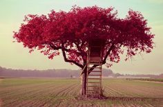 Love the color of this treehouse!