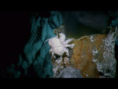 Video: Alien Deep - The Hoff Crab