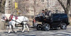Horse Carriage Hummer
