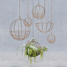 to Decorate With Air Plants (aka the New Succulent!) Show off your new air plants with a trendy, copper-hued hanging planter.Show off your new air plants with a trendy, copper-hued hanging planter. Hanging Planters, Hanging Baskets, Hanging Terrarium, Wire Baskets, Garden Planters, Wall Hanging Plants Indoor, Copper Planters, Hanging Gardens, Hanging Succulents