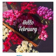Hello February 😍 I hope you will be better than January