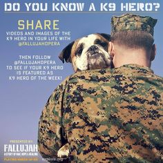 Do you know a Hero? Service Dogs, Did You Know, Pup, Blessed, Therapy, Legs, Friends, Board, Sweet