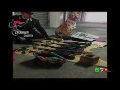 Carabinieri - Caserta - Sequestro armi e droga a Trentola Ducenta - www....