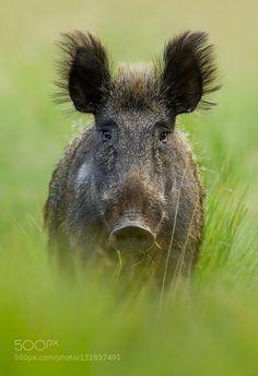 #Animals #Photography