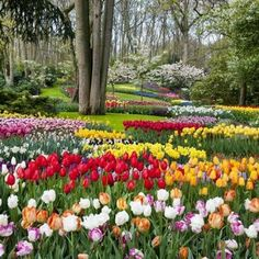 A free internet visit to Keukenhof, the famous tulip garden in Holland – Eden Brothers