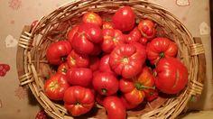 I miei Pomodori...un raccolto del giorno !