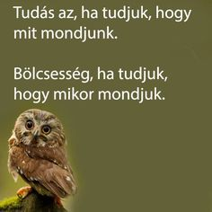 Affirmation Quotes, English Quotes, Picture Quotes, Life Quotes, Owl, Inspirational Quotes, Wisdom, Words, Funny