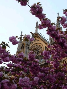 Paris in the spring time.
