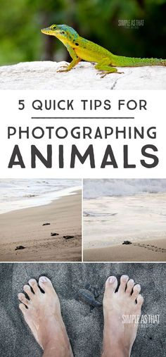 Capture amazing photos of animals with these simple tips!