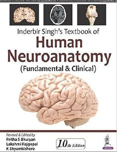 Exam 2 chapter 14 diagrams and labeling flashcards quizlet inderbir singhs textbook of human neuroanatomy 10th edition ccuart Choice Image