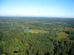 Бузулукский бор (фото сделано в полете)