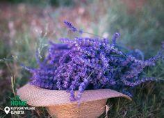 Селище Куюджак схоже на справжній лавандовий рай! #KuyucakVillage#lavender#Turkey #Homeof #Isparta Фото : betularslan10 /IG
