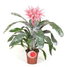 Pink Tulips, Types Of Plants, Gardening Tips, Ale, Tropical, Garden, Ale Beer, Ales, Beer