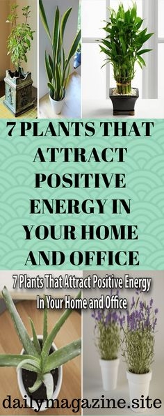 Numerous studies have shown that you can dramatically improve the atmosphere in the home and office if you keep certain plants in the room. These plants promote positivity and improve the energy in the space while filtering the air and supporting overall health. These are the best plants to have in the home and office …