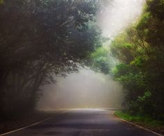 Bosque de laurisilva de Macizo de Anaga