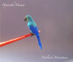Hyacinth Macaw OOAK - Dollhouse Miniature Feathered Parrot