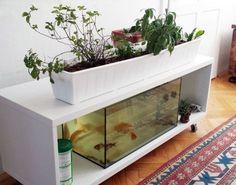 DIY Indoor Aquaponics Fish Tank Ideas 9