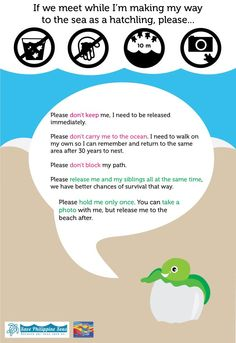 How to deal with sea turtle hatchlings if you see them! Sea Turtle Facts, Sea Turtles, Salmon Run, Environmental Education, Tortoises, Marine Life, Oceans, Under The Sea, Get One