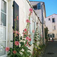 Ile de ré Photos, Instagram, Places, Novels, Gardens, Photography, Pink Houses, Small Island, West Coast