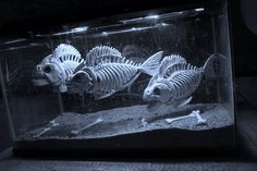 My version of a piranha tank for Halloween, using the K-Mart skelly fish. Simple, but I think effective! (October Pun'kin aka punkineater on Halloween Forum)