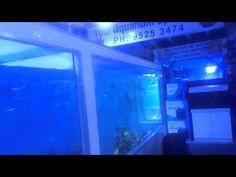 YouTube Pet Shark, Saltwater Aquarium Fish, Pets, Youtube, Marine Fish, Youtubers, Youtube Movies, Animals And Pets