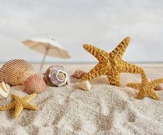 Starfish and shells and sand, oh my Beach Wallpaper, Images Wallpaper, Summer Wallpaper, Mobile Wallpaper, Widescreen Wallpaper, Cellphone Wallpaper, Desktop Wallpapers, Fb Cover Photos, Timeline Photos