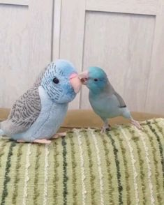 Baby parrot kissing the mother,Funny, Funny Categories Fuunyy Source by jmassena. Cute Little Animals, Cute Funny Animals, Cute Dogs, Funny Birds, Cute Birds, Pretty Birds, Funny Cats, Cute Animal Videos, Funny Animal Pictures