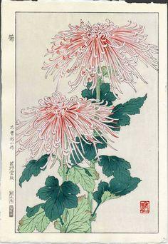 Pink spider mums Japanese woodblock print.