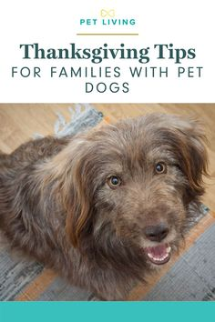 Having your pets with you during the holidays brings much joy! But it also can mean overcoming some challenges. Share these holiday pet safety tips with your friends and family this thanksgiving! #thanksgivingwithdogs #petsafetytips #dogthanksgiving Dog Care Tips, Pet Tips, Big Dogs, Small Dogs, Dog Mothers Day, Dog List, Dog Halloween, Love Pet, Gifts For Pet Lovers