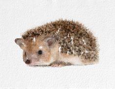 Hedgehog Watercolor Painting Art Print