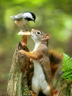 Nature, Mushroom,anima bird and squirrel. Nature Animals, Animals And Pets, Art Nature, Wild Animals, Beautiful Birds, Animals Beautiful, Animals Amazing, Simply Beautiful, Cute Baby Animals