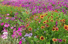Title: Garden Delight Artist: Lynn Bauer Medium: Photograph - Digital Art
