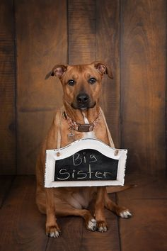 © Cathy Murai Photography | dog with big sister sign