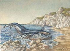 Πώς η φάλαινα απέκτησε το λαιμό της