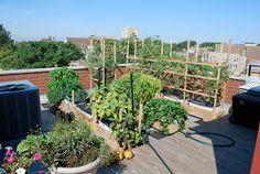 earthbox garden - Google Search