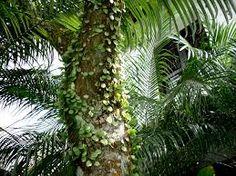 Image result for tropical rainforest