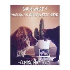 Pregnancy announcement cat and dog #pregnancy #catanddog #announcement #baby #aankondiging #zwangerschapsaankondiging #may2017