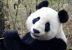 3:15 p.m. - Flute Practice | Community Post: A Day In The Life Of A Young Professional Panda