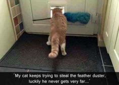 oh, cat!