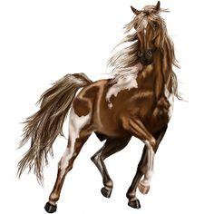 Riding Horse Paint Horse Liver chestnut Overo