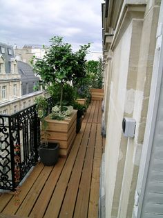 small trees on balconies in big pots - really love this idea for small gardens!