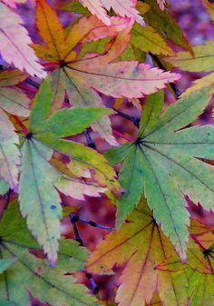 Autumn falling leaves color palette inspiration