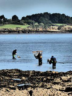 Ha, les marées d'automne! Brittany, France, Mountains, Nature, Photos, Travel, Fall, Viajes, Pictures
