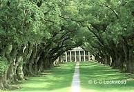Oak Alley #Plantation. #Louisiana