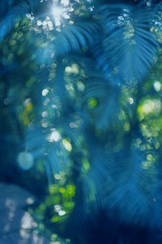Marcelo Gomez palm, color, blue green