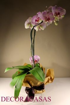 papel pardo Parda, Kraft Paper, Gift Suggestions, Infinity, Wraps, Cool Stuff, Tape, Succulents, Plants