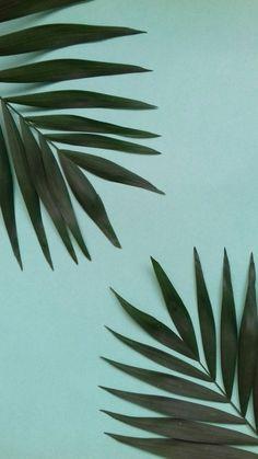 Tumblr iphone palm leaf pink backround wallpaper