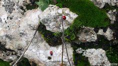 Las Foces del Río Pendón, #ruta de #montaña por #Asturias (#España). Flora y fauna: #musgo y #mariquitas